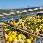 limoni paesaggio