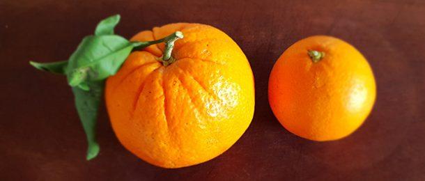 arance da spremuta e da tavola