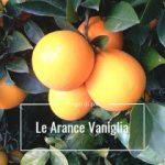 arance vaniglia