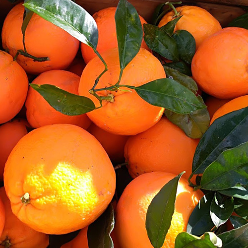 arance navelina